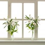 Antje Terhaag – Fenster
