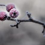 Juergen Stodt - Früchte gefroren