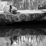 Peter Gilberg - Monolog am Wasser