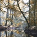 Marianne Schlüter _ Im Herbstwald