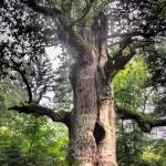 Barbara Wünsche - Magischer Baum
