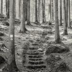 Ruediger Theiss stairway