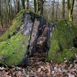 Heiner Ott - totes Holz