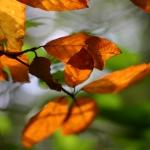Isabell Kunze 01 - Herbstblätter