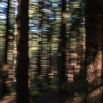 Markus Peerenboom Wald Abstrakt