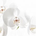 2014_10_platz-3_m2-regra02_orchidee