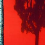 Bärbel Brechtel-Schatten von Baumkrone