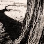 Schattenspiele - Heike Skamper