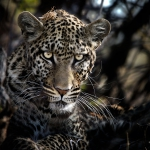 Frank Spiegel - Leopard I