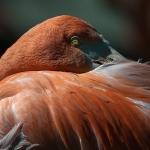 Flamingo_Marianne Schlüter