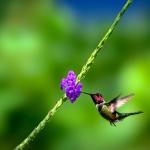 Frank Spiegel - Humming Bird