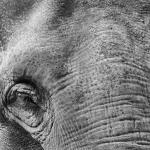 Ruediger Theiss - Elefant