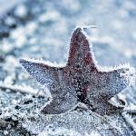 Ferdinand Dahlmanns - Winter