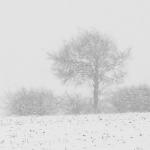 Ruediger Theiss - Schneegestöber