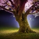 Antje Terhaag – Lichtbaum