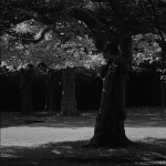 Marcel Huefken - Trees