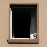 Gerhard Stöfer - Am Fenster