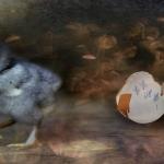 Kati Hoku - auf der Flucht
