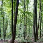 Heiner Ott - Wald