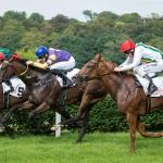 Kerstin Schütze - schnelle Pferdchen