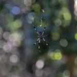 u1-mh-1-spider-florida_tn