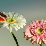 2014_03_platz-4_o2-ms_02-painting_flowers_1650_tn