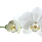 i1-gh_1_10-14_orchidee