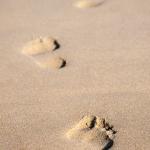 q1-ng_01_footprints