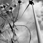 Ralf_Sonn - Windbluemchen