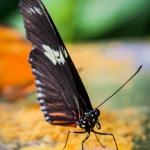 24b-NG_02_Schmetterlingsdinner.jpg