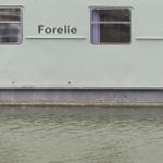 Hafen - Forelle