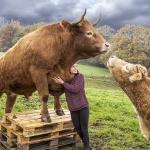 Ferdinand Dahlmanns - Küss' mich du Ochse