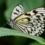 2014_04_platz-3_o1-ks_01_schmetterling_tn