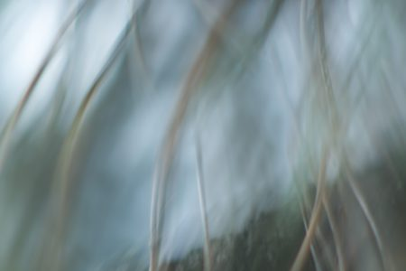 Im Wind - Andrea Hermann