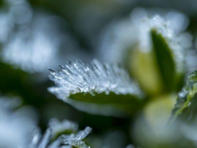 Ice-spikes - Ulrike Scharfenberger